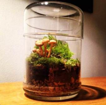 plantes en bocal des terrariums d licats et raffin s un jour une couleur. Black Bedroom Furniture Sets. Home Design Ideas