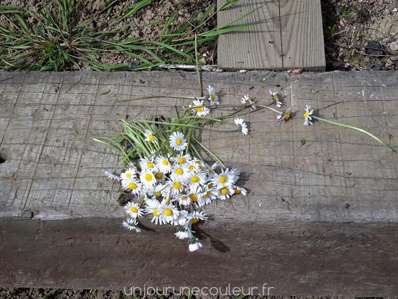 bouquet de pâquerettes pour réaliser une couronne de printemps
