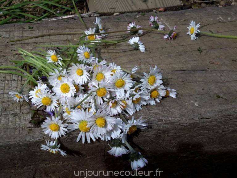 bouquet de pâquerettes pour faire des couronnes de fée ou de princesse