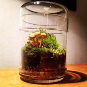Plante en bocal... avec des champignons !