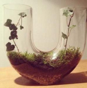 terrarium en U : lierre et mousse