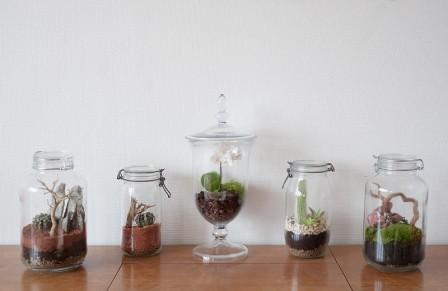 plantes en bocal