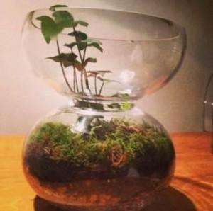 Plante en bocal sablier